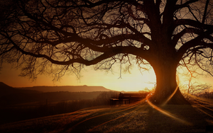 An old tree by Tarielle