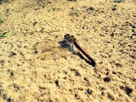 Dragonfly by Bouwland