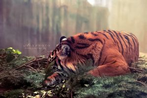Resting by Alyphoto