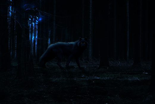 The Night Wolf by tahbikat
