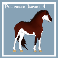 Polharder Import 4 RAFFLE OPEN by blanjojo