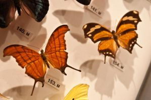 moths and butterflies stock148 by hatestock