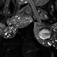 Water Drops by WhiteBook
