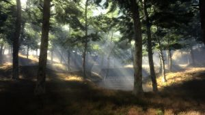 Rays in the forest by Andywong75