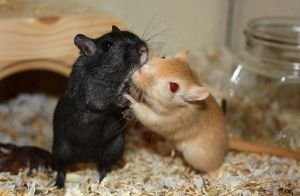 Gerbil Love by Naxory