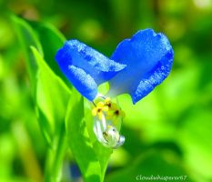 Sweet, Soft, Tiny, Cute and Blue by Cloudwhisperer67
