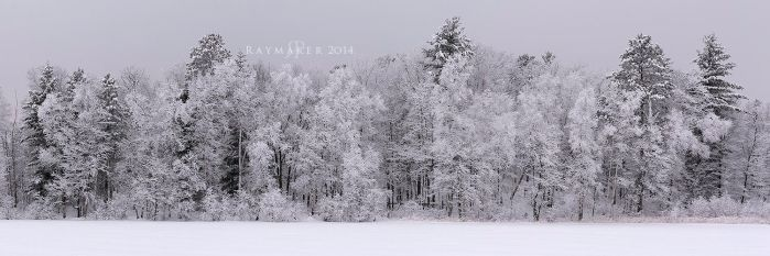 White Winter Woods by Raymaker