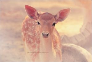 sweet fawn by Lenna3