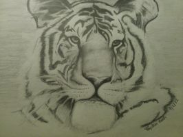 Tiger by Baby-Elephant