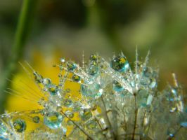 Flowers in Waterdrops by bluedragoneye