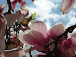 Spring Tulip Tree by DJCandiDout