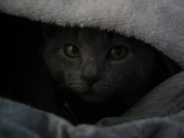 Hiding In Haunted Laundry by Emagyne