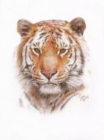Watchful Tiger by Sini-M
