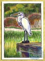ACEO-ATC: Great Egret by crocodiledreams