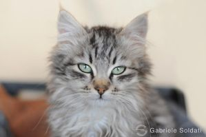 My new Cat by Gbrlit