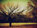 A Tree... by FireCrottch333