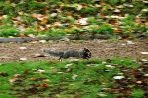 Flying Squirrel by EarthHart