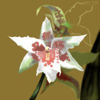 Orchid sketch by Fresh-H