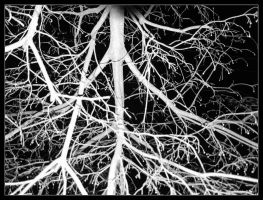 Earthly Roots by iambored