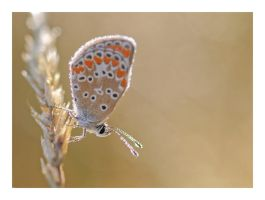 Twinkling butterfly by Ernestine-SB