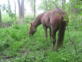 muddy horse in forest by lunae13