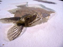 Fossil Fish by Mountaineer47