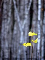 Autumn continues... by Yancis