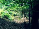 Forest 9 by FuriarossaAndMimma