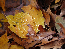 Fallen leaves with rain by Mogrianne