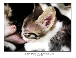First days of a kittens life by blinka