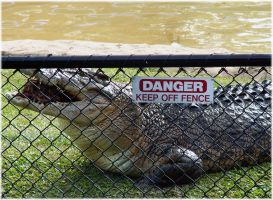 Keep off the fence. by angelwillz