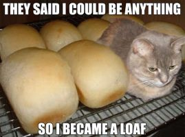LOAF KITTY by brycemaz