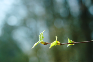 Reaching for the Sun by Schnitzelyne