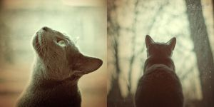 Watcher. by xdramatique