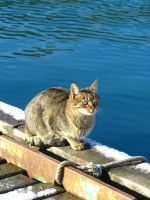 """sea"" cat in Balaklava by Mari-Ghostly"