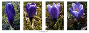The Life Of A Flower. by FSGPhotography