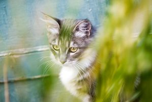 The blues of the cat by ChristineAmat