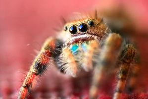 Jumper Portrait by FramedByNature