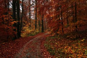 The autumnal woods of Farchau by sahk99