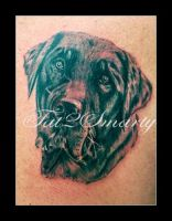Tattoo Labrador by SmartyPhoto