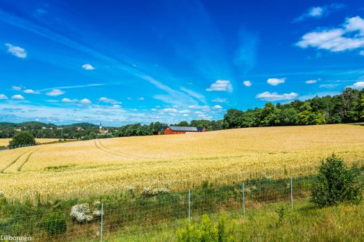 Landscape-1 by WeePee