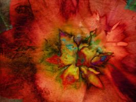 Flower Red by Tackon