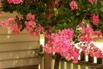 Pink Flowers by a House by catnipKinesis