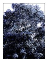 obsession tree-agac sevgisi by lombat
