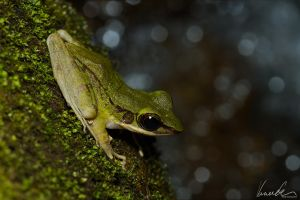Tree-frog #02 by vetchyKocour