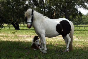 Mini Mare and Foal Stock 3 by GloomWriter