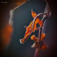 Note d'automne. by hyneige