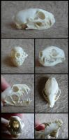 Common Dwarf Mongoose Skull by CabinetCuriosities