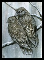 Snow Crows by astercrow