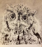 Owl by naama6699